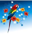 bright parrots vector image