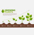 different steps of growing plants vector image