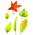 Six different leaves vector image