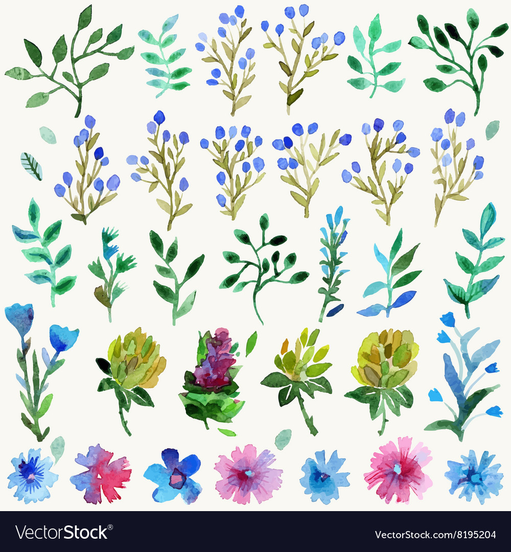 Watercolor set with leaves and flowers vector