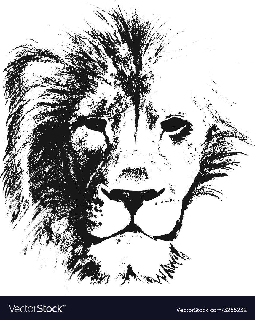 Lion head hand drawn vector