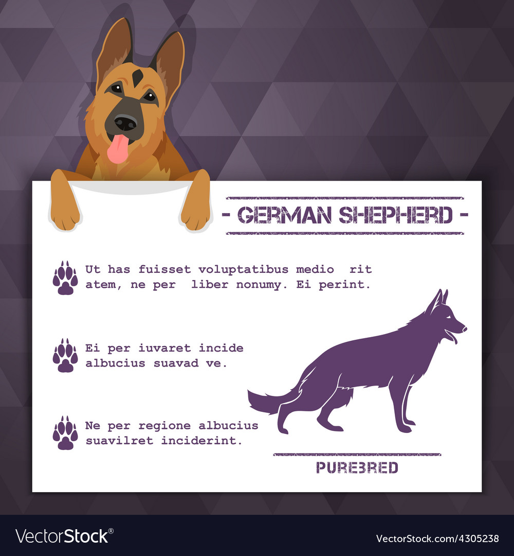 German shepherd dog banner vector
