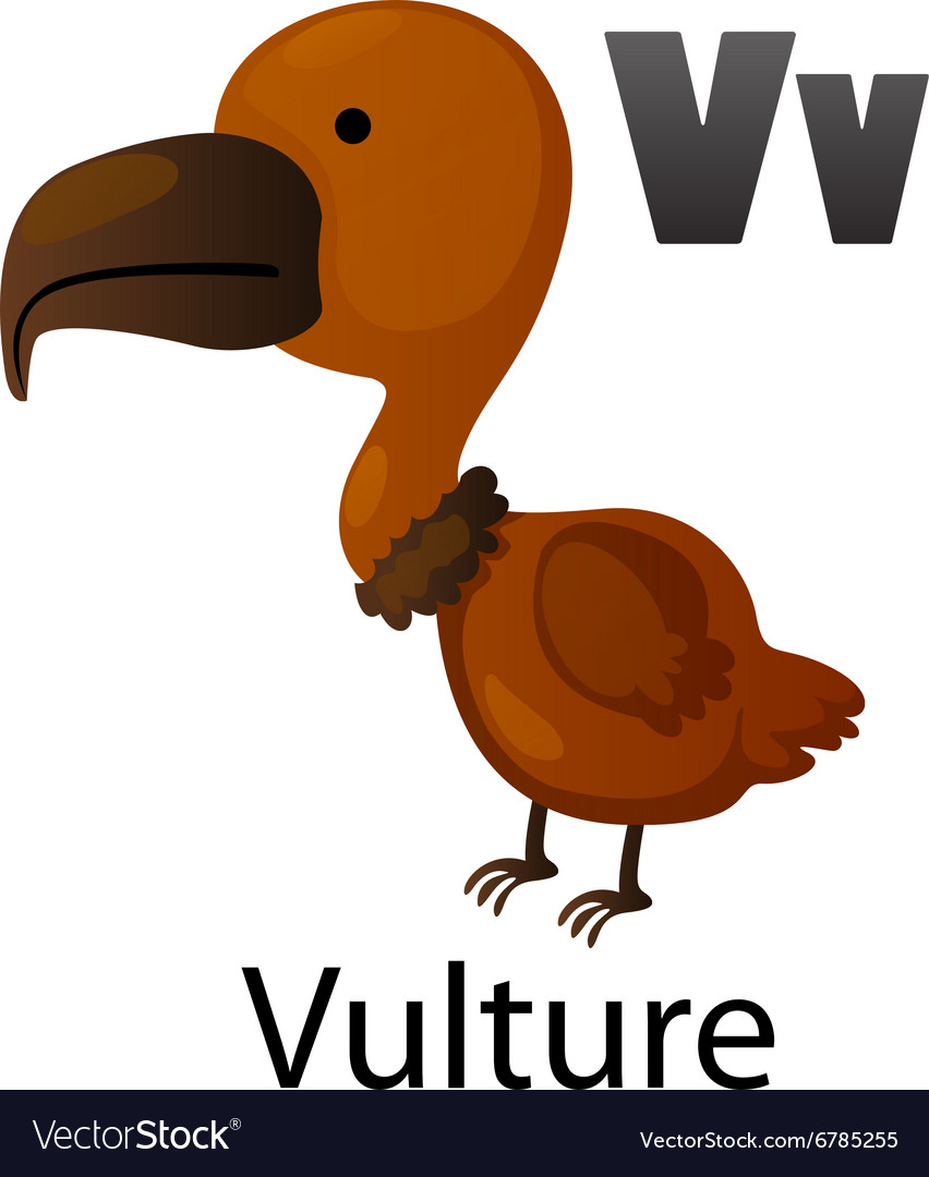Alphabet v with vulture vector