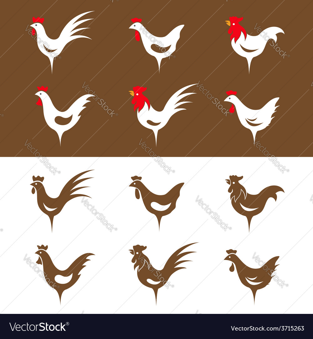 Chicken design vector