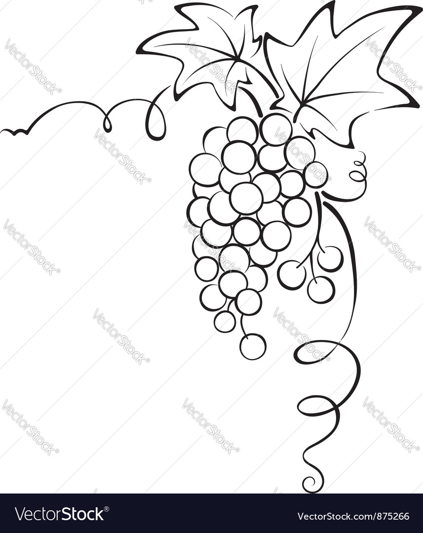 Graphic design  grapevine vector