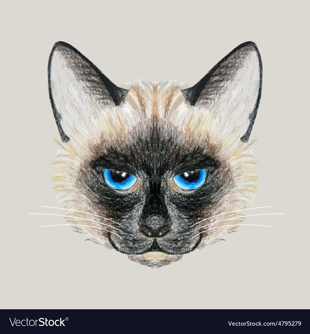Hand drawn siamese cat vector