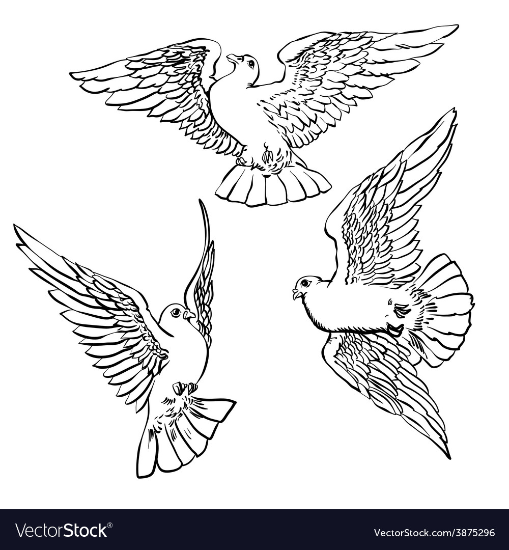 Three flying doves sketch set vector