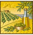 Olive harvest vector image