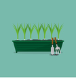 Green Onions Cultivating vector image