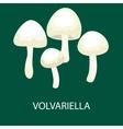 Volvariella volvacea Straw Mushroom Wild Foraged vector image