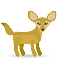 Funny Fennec Fox Cute on a white background vector image