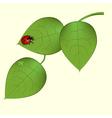 funky ladybug vector image