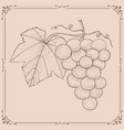grapes hand drawn sketch on beige background vector image