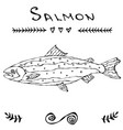 Salmon fish for fishing club or seafood sushi menu vector image