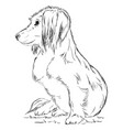 small dog vector image