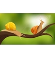 Snails In The Wild vector image