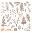 hand drawn fir and pine branches fir-cones vector image