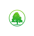 pine tree green ecology logo vector image