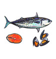 sketch fish tuna salmon steak mussels vector image