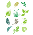Set of green leaves design elements vector image vector image