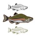 salmon fish set vector image
