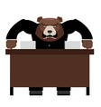 Angry Boss bear scolds Wicked head yelling at vector image