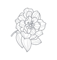 Fully Open Peony Flower Monochrome Drawing For vector image