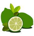 Lime fruit vector image