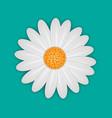 white daisy chamomile flower vector image vector image