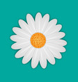 white daisy chamomile flower vector image