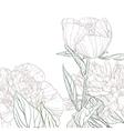 Peonies line art vector image