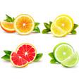 Citrus Fruits Segments 4 Realistic Icons vector image