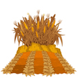 Planting corn vector image