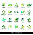 green leaf eco design friendly nature elegance vector image