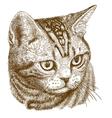 engraving cat head vector image vector image