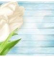 White tulips on turquoise wooden back EPS 10 vector image