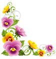pansy vector image