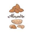 AlmondsHand drawn vector image