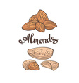 AlmondsHand drawn vector image