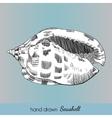 Hand drawn marine seashell vector image