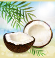 coco and palm leaves vector image