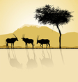 African landscape in sunset time vector image