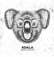 hipster animal koala hand drawing muzzle of koala vector image