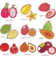colorful hand drawn set with tropical exotic vector image
