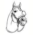 horse head vector image