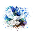color of a dove vector image