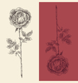rose flower vintage engraved retro vector image