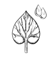 Heart shaped sappy leaf and water drops vector image