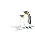 penguins hand drawn vector image