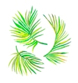 Watercolor palm leaves isolated on white vector image